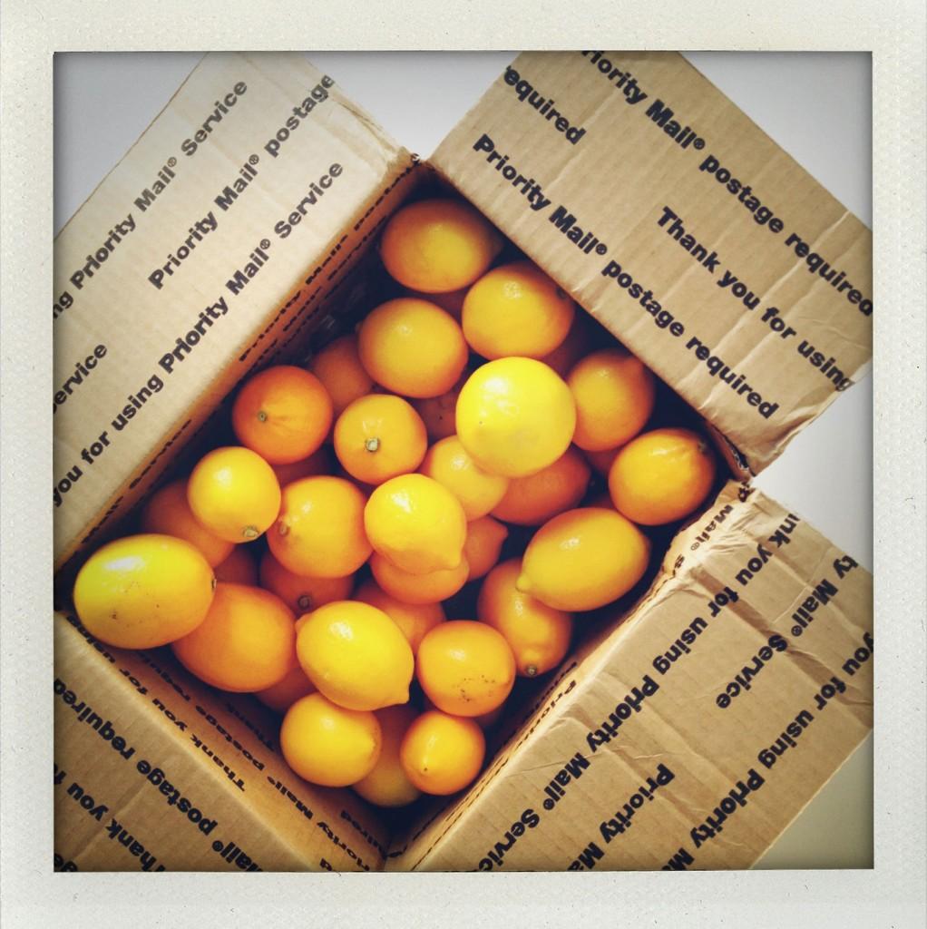 meyer-lemons-2
