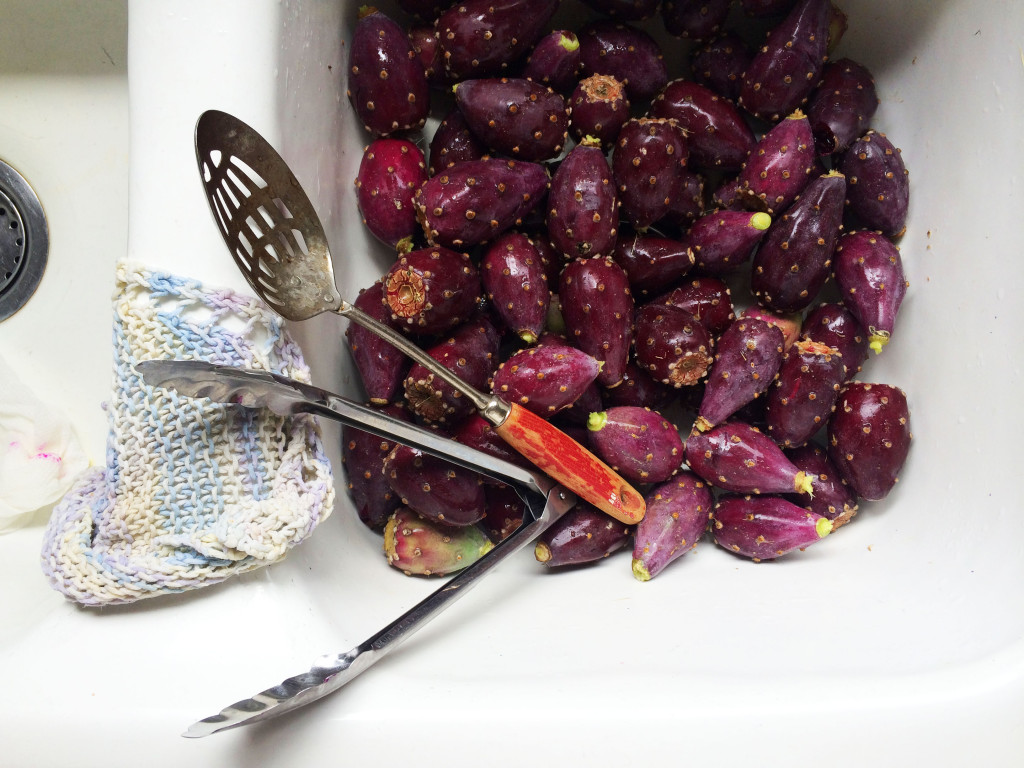 Harvesting and Processing Prickly Pear Fruit // Autumn Makes & Does