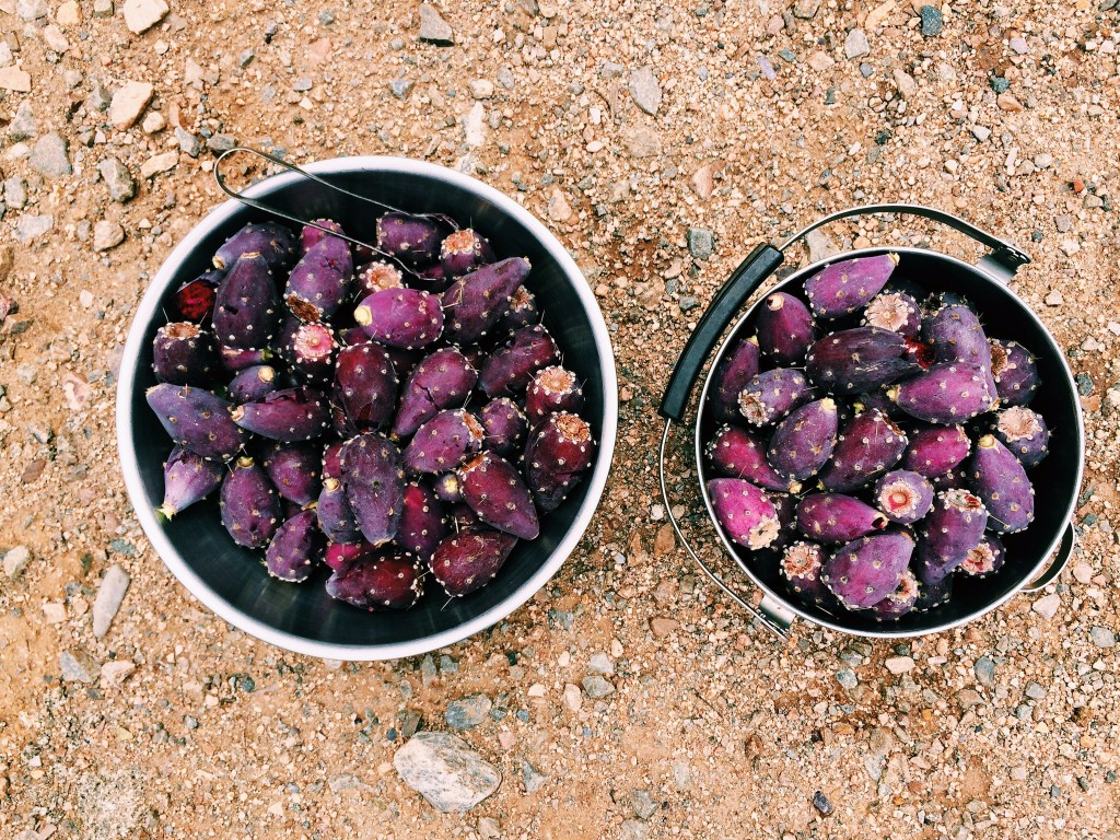 Prickly Pears // Autumn Makes & Does